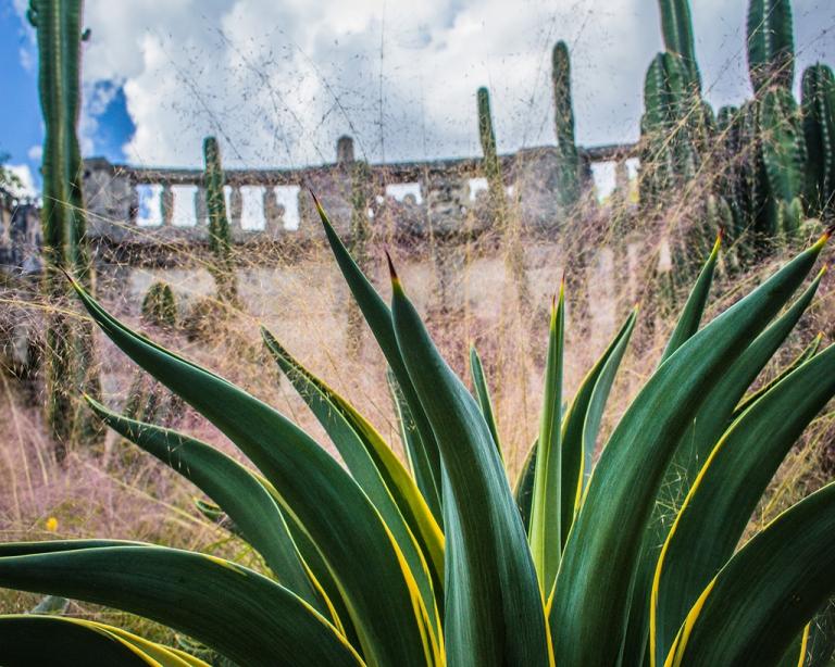 vizcaya-garden